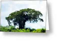 Giant Tree In Amazon Skyline Greeting Card