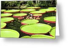 Giant Water Lily Platters Greeting Card