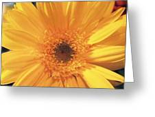 Giant Yellow Daisy Greeting Card by Linda A Waterhouse