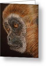 Gibbon Greeting Card by Karen Ilari