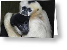 Gibbon Togetherness Greeting Card