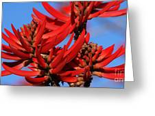 Gift Of Zimbabwe Greeting Card by Linda Shafer