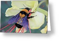 Gila Bumblebee Love Greeting Card