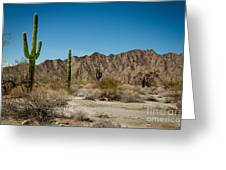 Gila Mountains And Sonoran Desert Greeting Card