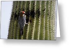 Gila Woodpecker Greeting Card
