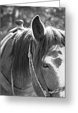 Gillagan The Horse In Glacier National Park   Greeting Card