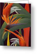 Ginger And Bird Of Paradise Greeting Card