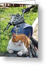 Ginger And White Tabby Cat Sunbathing On A Motorcycle Greeting Card