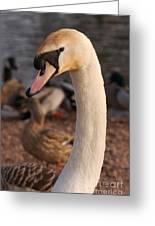 Ginger Swan Greeting Card