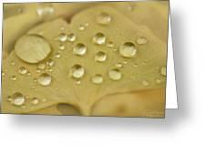 Ginkgo Balls Greeting Card