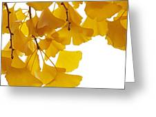 Ginkgo Ginkgo Biloba Leaves In Autumn Greeting Card