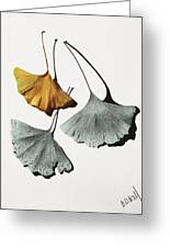 Ginkgo Leaves Greeting Card
