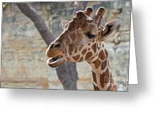 Girafe Head About To Grab Food Greeting Card