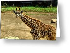Giraffe 1 Greeting Card