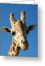Giraffe 2 Greeting Card