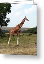 Giraffe 3 Greeting Card