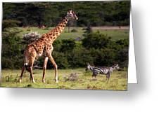 Giraffe And Zebras Greeting Card