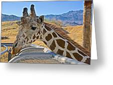 Giraffe At Feeding Station In Living Desert Zoo And Gardens In Palm Desert-california Greeting Card