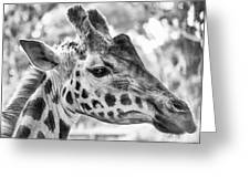 Giraffe Bw Greeting Card