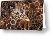 Giraffe - Camouflage Greeting Card
