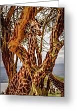 Giraffe Camouflage Greeting Card