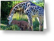 Giraffe Feasting Greeting Card