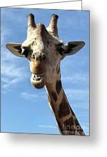 Giraffe Greeting Greeting Card