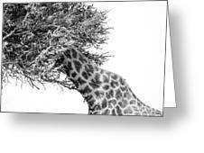 Giraffe Hide And Seek Greeting Card