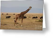 Giraffe In The Serengeti Greeting Card