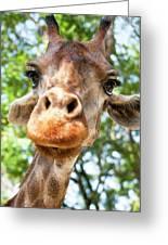 Giraffe Interest Greeting Card