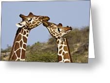 Giraffe Kisses Greeting Card