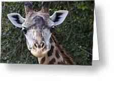 Giraffe Looking At You Greeting Card