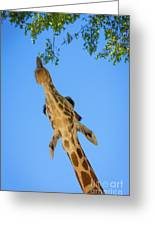 Giraffe Lunch Greeting Card