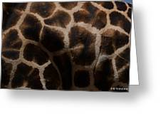 Giraffe Patterns  Greeting Card