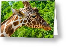 Giraffe Profile Greeting Card