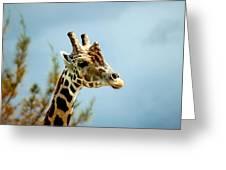 Giraffe Sky High Greeting Card