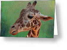 Giraffe Square Painted Greeting Card