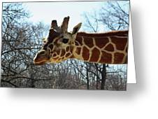 Giraffe Stretching For A View Greeting Card