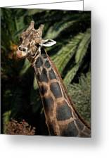 Giraffe Study 2 Greeting Card