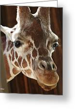 Giraffe Taking A Peek Greeting Card