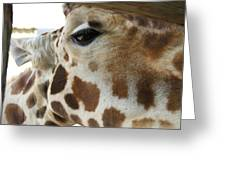 Giraffe Up Close Greeting Card