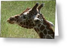 Giraffe's Head Greeting Card