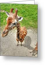 Giraffe's Point Of View Greeting Card by Michael Garyet