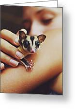 Girl Holding A Cute, Adorable And Curious Baby Sugar Glider Pet On Her Arm Greeting Card