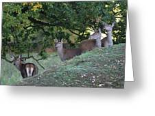 Girls On A Hill Greeting Card