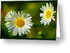 Give Me Daisy In Color Greeting Card