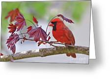 Give Me Shelter - Male Cardinal Greeting Card by Kerri Farley