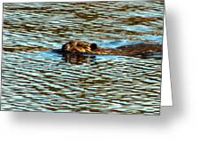 A Swim By Greeting Card