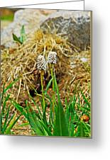 Glacial Wildflowers Greeting Card