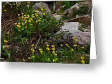 Glacier Lily 4 Greeting Card